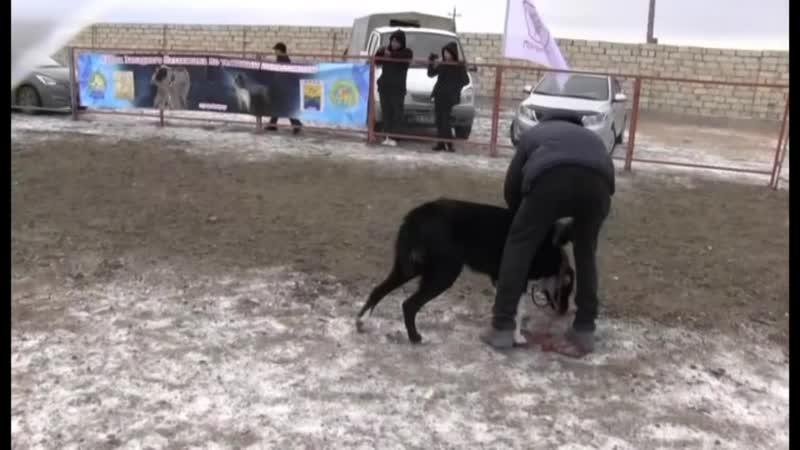 Тайсон Бейнеу и Караш Актобе