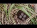 Жилища животных - (серия 2 из 3) - [Full HD 1080i]