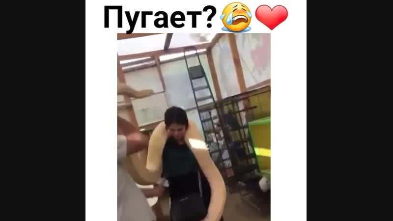 Бояка