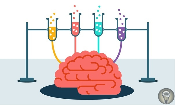Из книги доктора нейробиологии Льюиса Джека «Мозг: краткое руководство