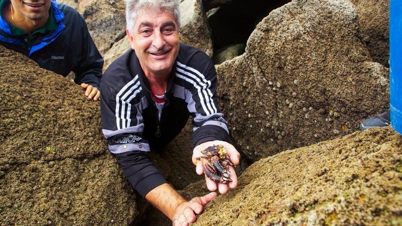 Harvesting Percebes on the Rocky Coastline of Galicia | The Recipe Hunters in Galicia, Spain
