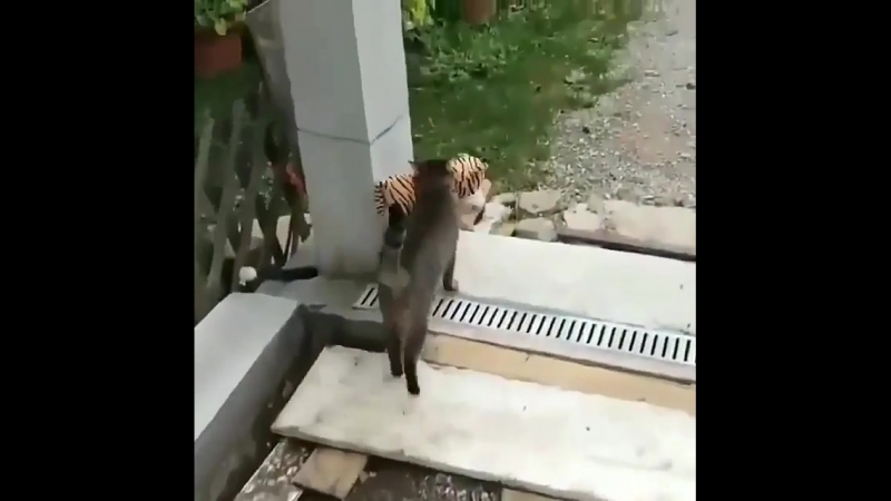 кот шалун