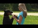 Доберман - собака, которая можети и развеселить, и защитить хозяина