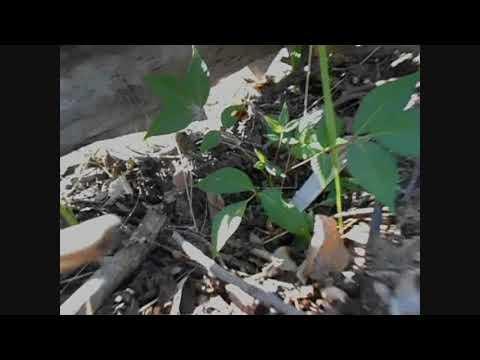 летняя пересадка растений с последующим притенением из подручных материалов