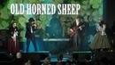 Old Horned Sheep 1 Бретоно балканская Penquin Cafe 17 03 2018 СПб Aurora Concert Hall HD