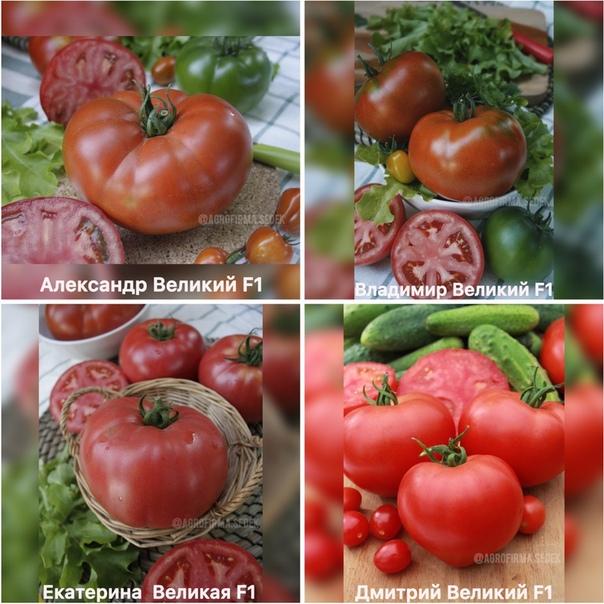 Подбираем сорта томатов для теплицы