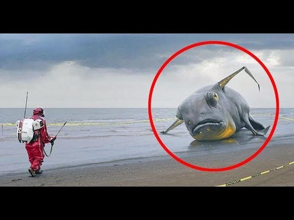 Найдено неизвестное науке существо! Неужели под водой живет чужая высокоразвитая цивилизация?