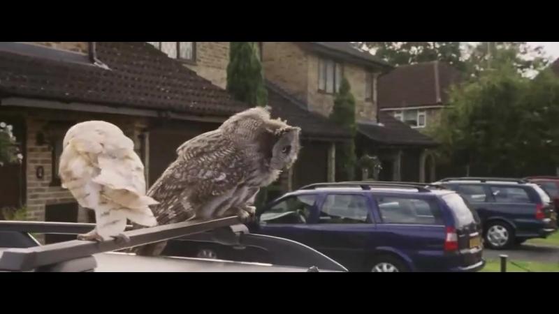 Гарри Поттер и Синергия