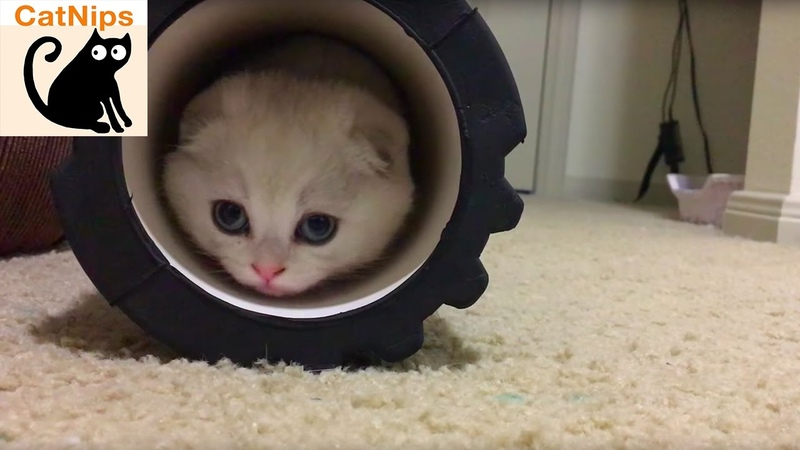 Playful Kitten Makes Adorable First Impression | Catnips