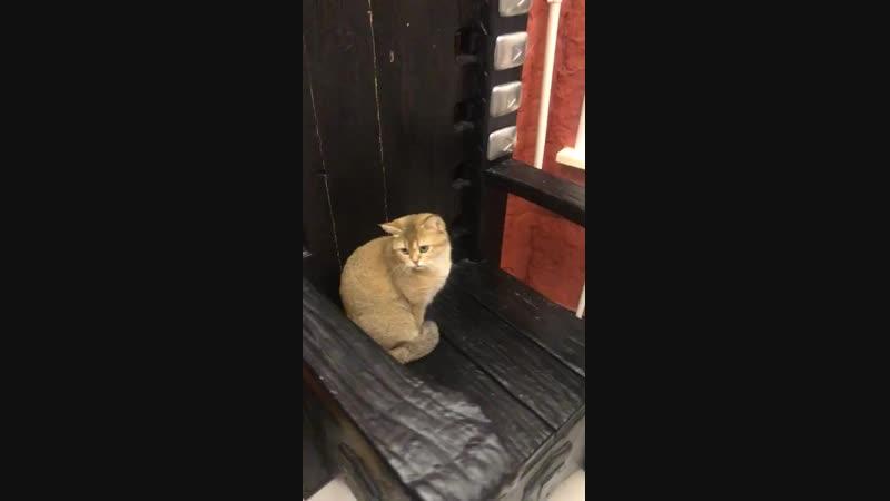 Шаня на троне