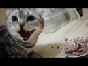 рагу bonus кормление кота