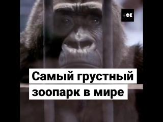 Самый грустный зоопарк в мире