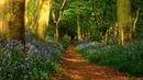 Картинка природа. Тропа, лес, дорога, тропинка, весна, стволы, цветы, природа, деревья