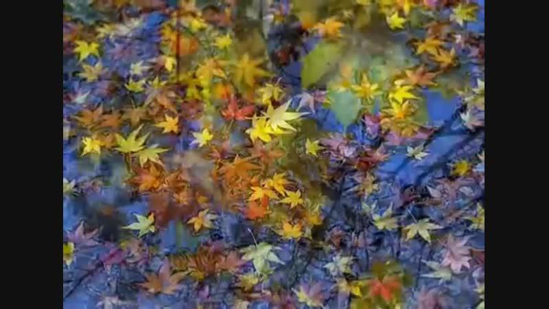 Осень! 🌳🍀🍂☘🍁🌿
