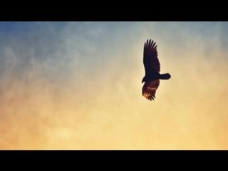 Вот, что делает орел, когда доживает до старости. Людям есть чему поучиться…