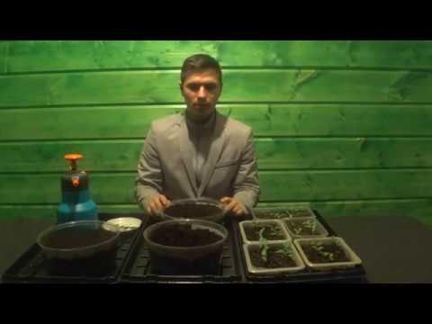 Андрей Хохликов Посев семян лука на рассаду
