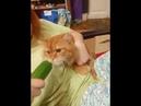 Кот Алексей ест огурец и злится