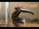 Приколы с котами и смешная ОЗВУЧКА животных – ТОПовая подборка 2018 от PSO
