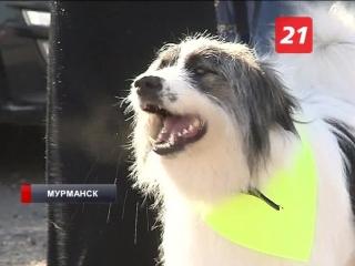 В Мурманске прошла выставка животных из приютов «Хочу домой»