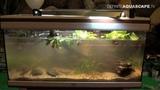 Setting up biotope aquarium - South America, ZooSphere 2014