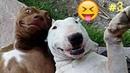 Smešne i Slatke životinje Smeh Do Suza 2018 HD 3
