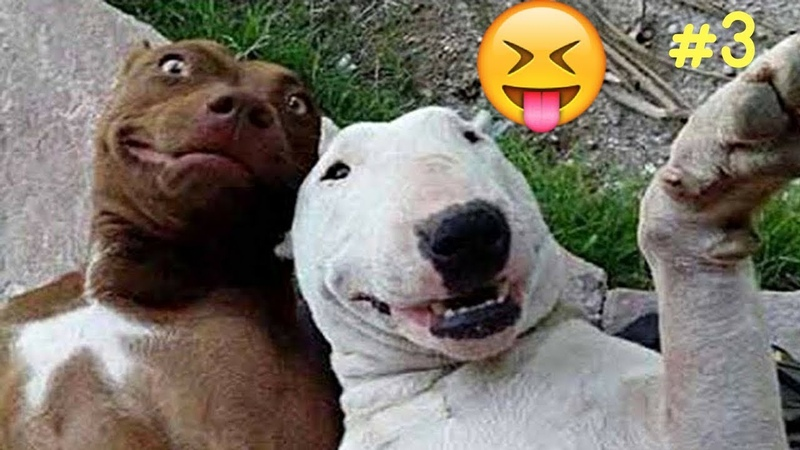 Smešne i Slatke životinje - Smeh Do Suza - 2018 - HD - 3