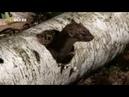 Землеройки - убийцы - фильм классический ужастик-фантастика