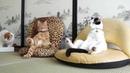ПОПРОБУЙ НЕ ЗАСМЕЯТЬСЯ Смешные Приколы и фейлы с Животными до слез смешные коты 90