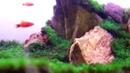 Bể Cá Cảnh Rêu MiniFiss - Bể 40-22-27 - Chỉ Lọc Thác Và Đèn