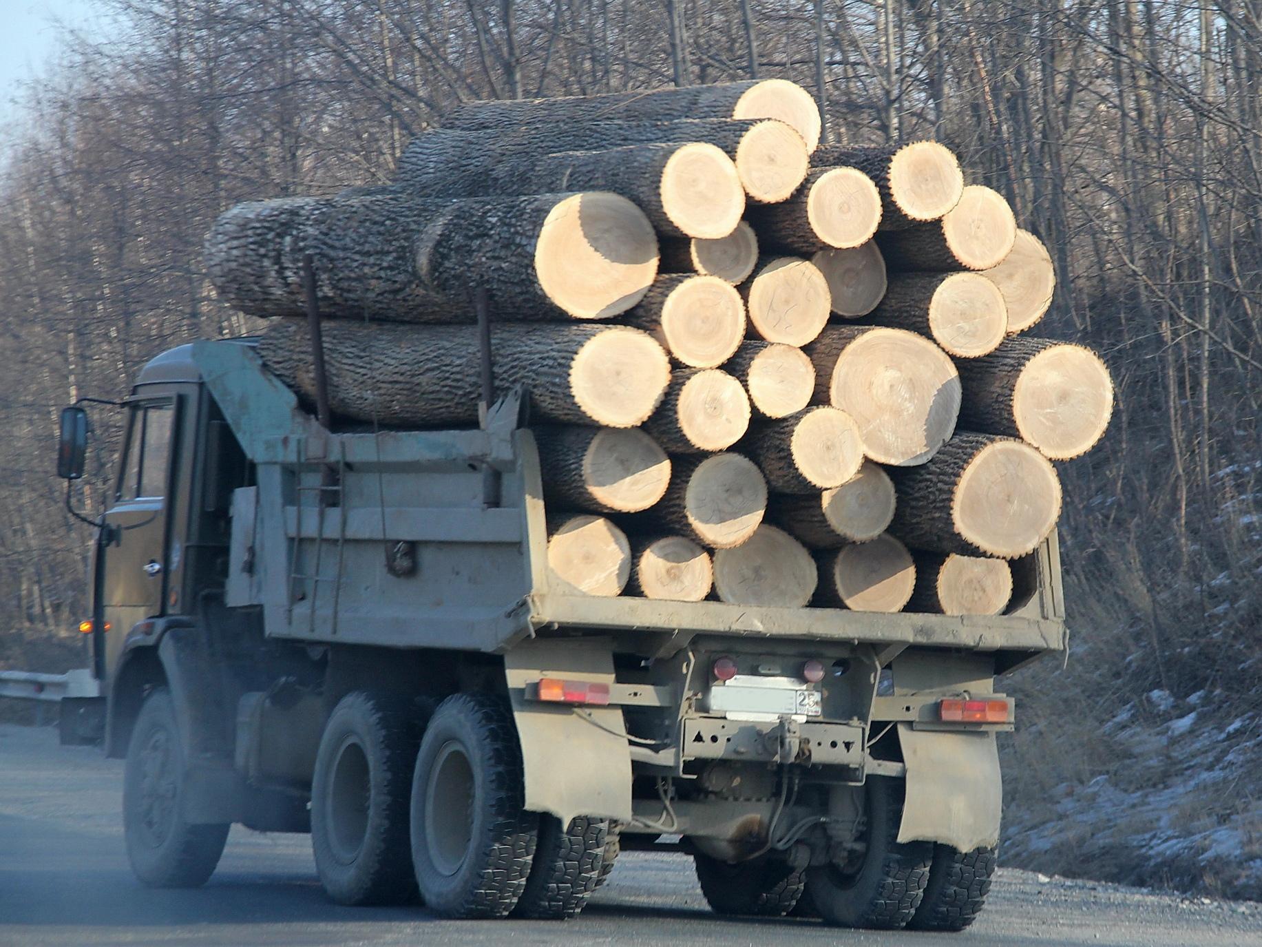 В Северодонецке обнаружили незаконно вырубленную древесину