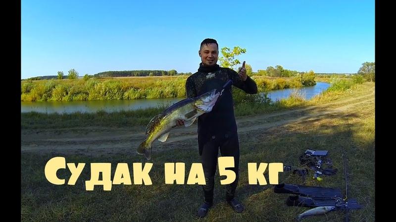 Один нырок1 Подводная охота, Судак на 5 кг!