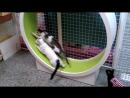 Как кошка в колесе