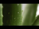 Aloe Vera HD Зачем нужен питьевой гель алоэ вера