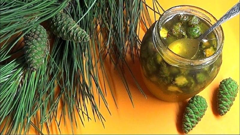 Для детей и взрослых мед из сосновых шишек от кашля ангины простуды Заготовьте сейчас