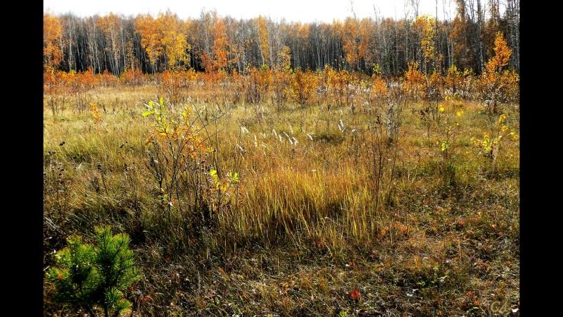 Брошенные паевые земли Вологодчины будут возвращены в сельхозоборот