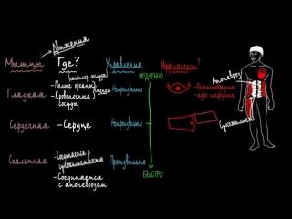 1. Три типа мышц