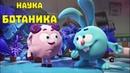 Ботаника сборник Смешарики ПИН код Познавательные мультфильмы