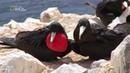 Nat Geo Wild: Дикие острова. Серия 1. Атлантический ковчег (1080р)