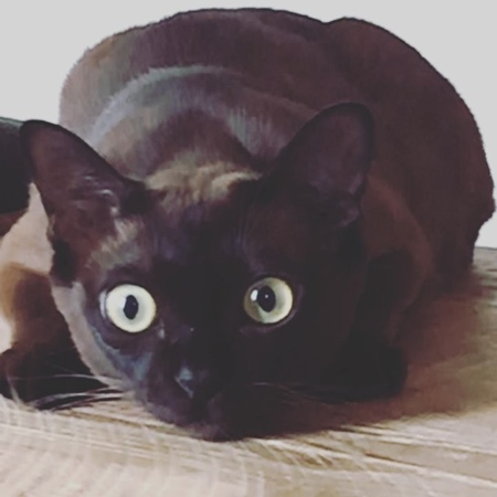 """Tyn the cat on Instagram When I see my human making @smallsforcats for me prepared to eat mysmalls 👁 dilated"""""""