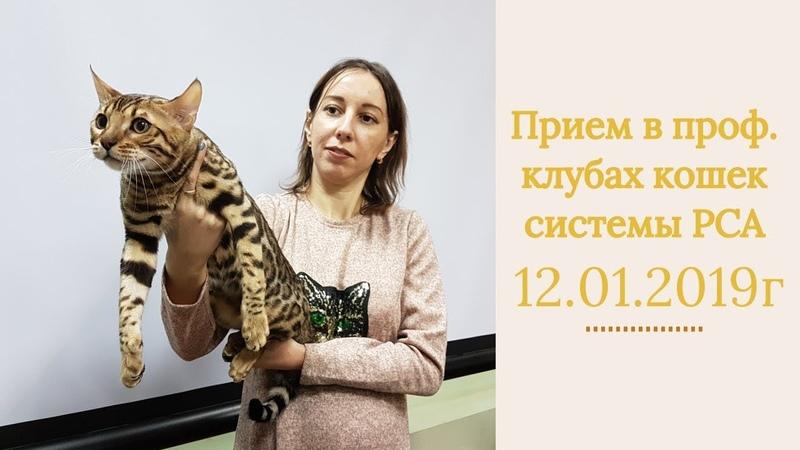 Прием в проф. клубах кошек PCA 12.01.2019г