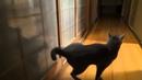 Смешные коты и кошки Кот стучит в дверь задней лапой