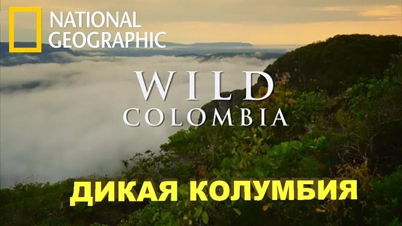 Путешествие Дикая Колумбия Serrania de la Macarena National Geographic