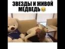 Ольга Бузова и живой медведь пранк😄😄