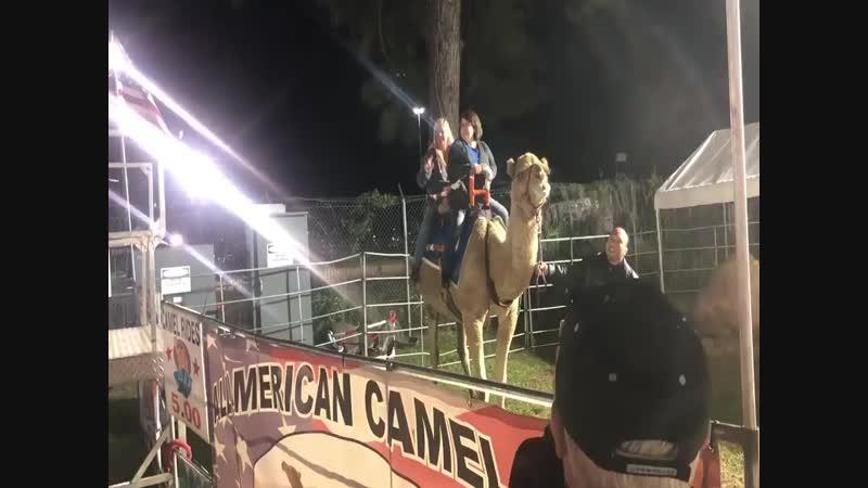 В США верблюд покусал мужчину