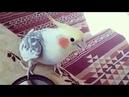 Crazy Parrot Say I'm so Pretty