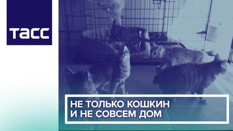 Не только кошкин и не совсем дом