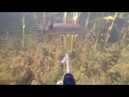 Подводная охота на раскатах .Spearfishing on the peals .