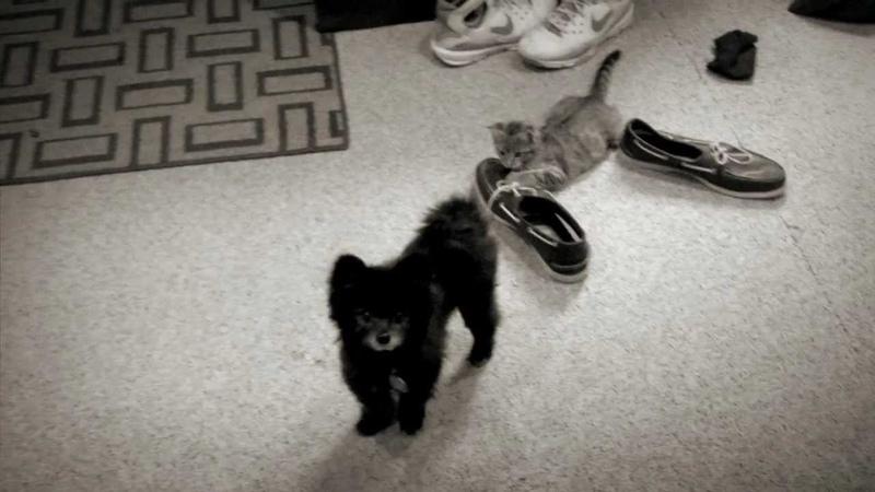 Herculion - Year in the Dark - Teaser 2 - Kitten vs Pomeranian