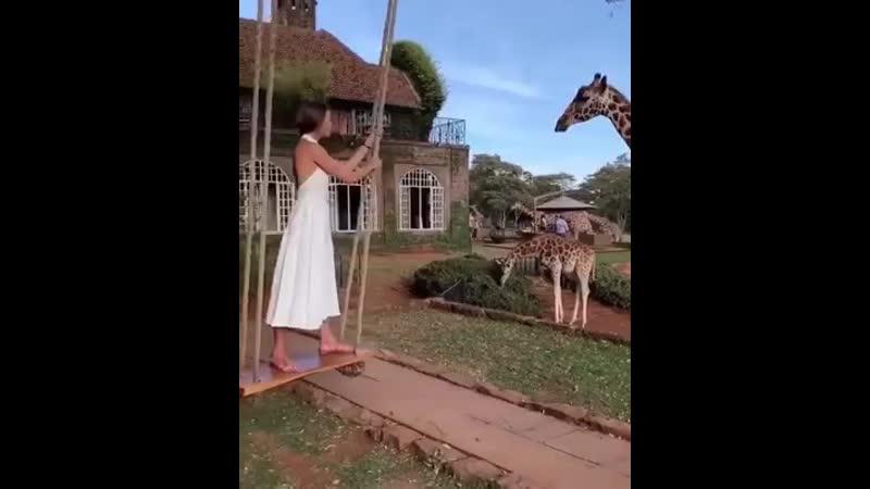Утро в жираф усадьбе 🦒 потрясающе 😍❤️