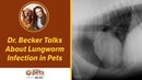 Паразитарные инфекции лёгких у домашних животных Lungworm Infection in Pets